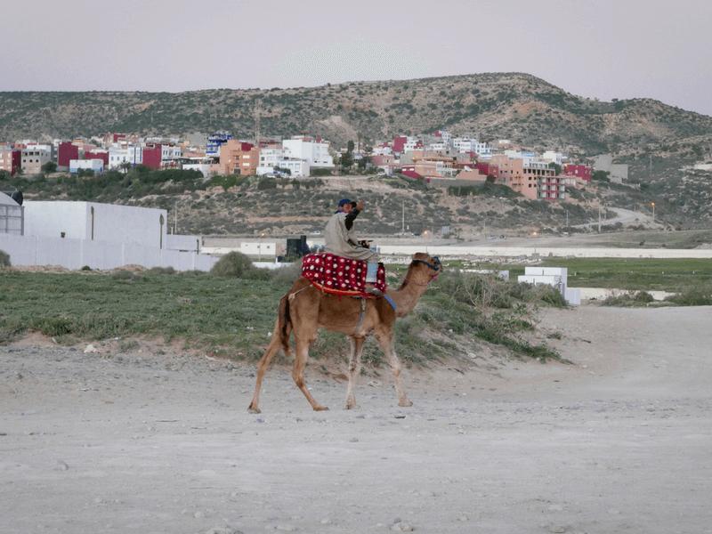 morocco camel rider